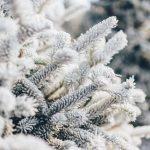 Цитаты про мороз