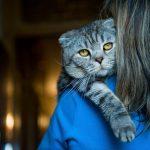 Цитаты про котов