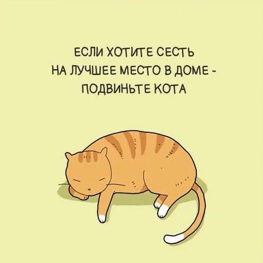 Картинки с прикольными фразами-коты