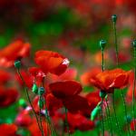 Цитаты про красный цвет