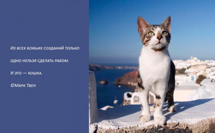 картинки со смыслом про котов ставшая частью
