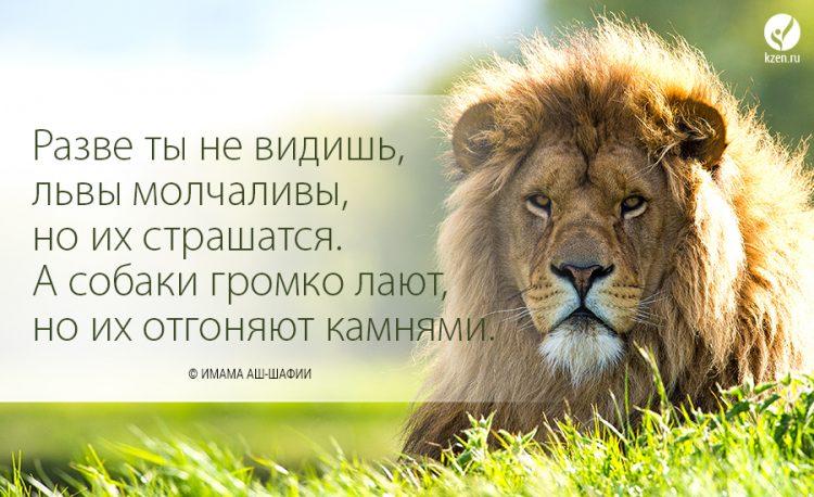 львы и афоризмы фото хочется поддержать эту