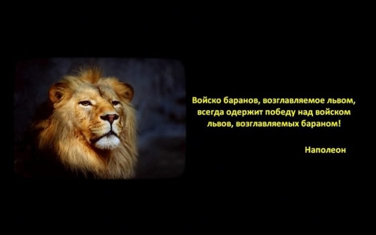 Львы на рабочий стол - красивые картинки (35 фото) • Прикольные ... | 469x750