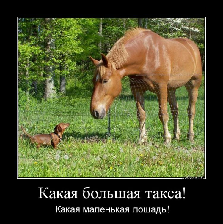 Смешные картинки с лошадьми и надписями, марта открытки