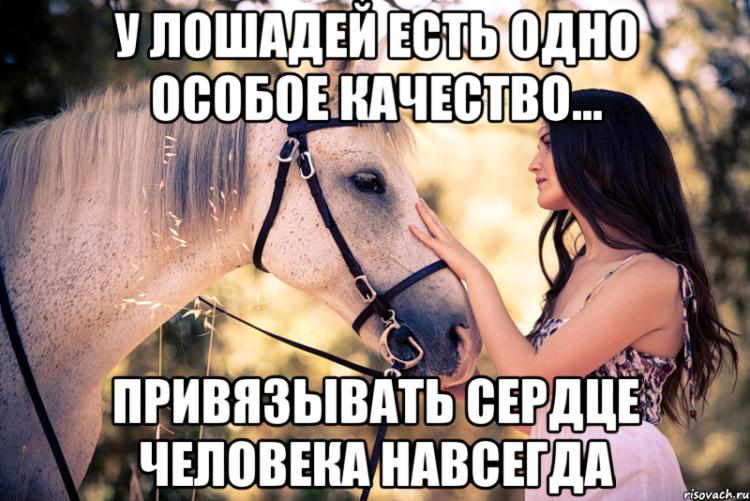 такое возможно стихи про конный спорт до слез представляет
