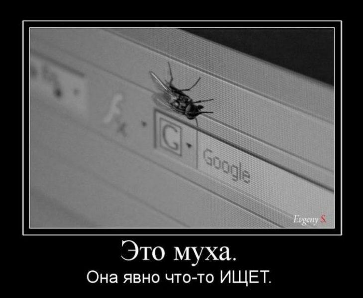 демотиватор мухи с одного некоторых доспехах могут