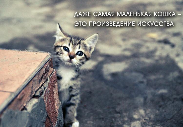 Картинки со смыслом с кошками