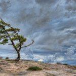 Цитаты про ветер
