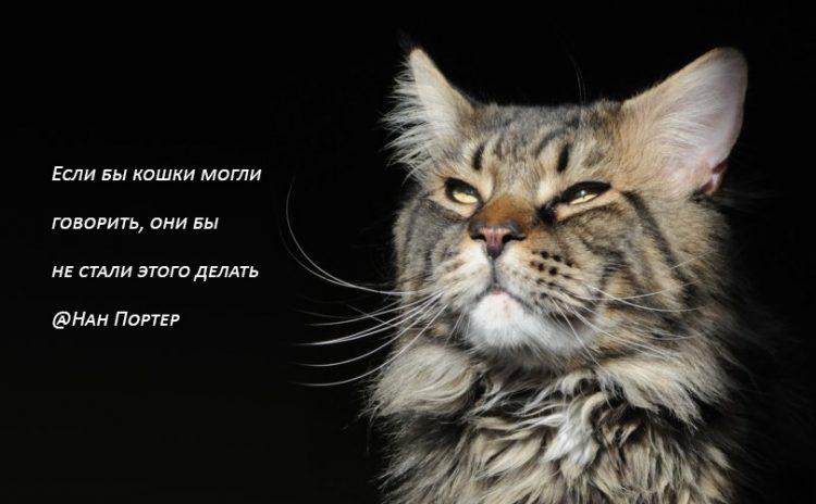 Картинки со смыслом про котов они